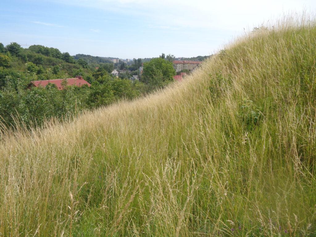 Widok ze wzgórza nad ulicą Kartuską